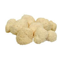 Igelstachelbart-Pilze