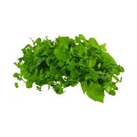 Kräuter-'Salat'