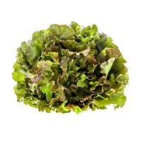 Bunte Salate, gemischt