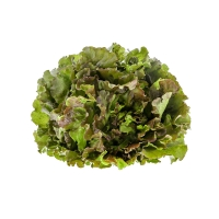 Bunter Salat klein - günstig