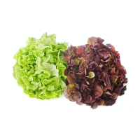 Salat Duo